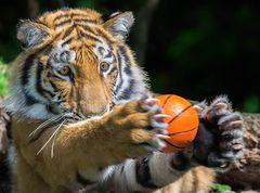 Ich fange den Ball ....
