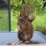 Ich freu mich so.......es gibt bei Bea immer lecker Nüsse.