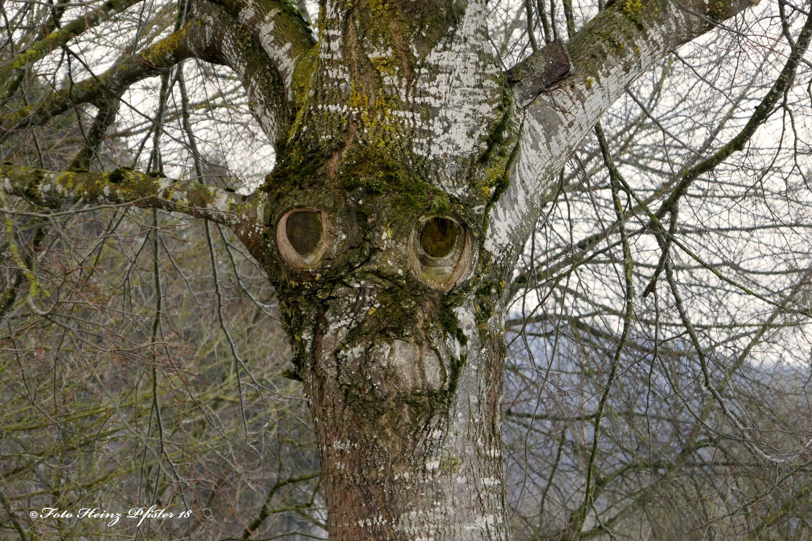 Ich Fuhle Mich Beobachtet Foto Bild Pflanzen Pilze Flechten