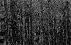 Ich geh jetzt in den Birkenwald......