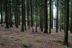 Ich ging im Walde so für mich hin...