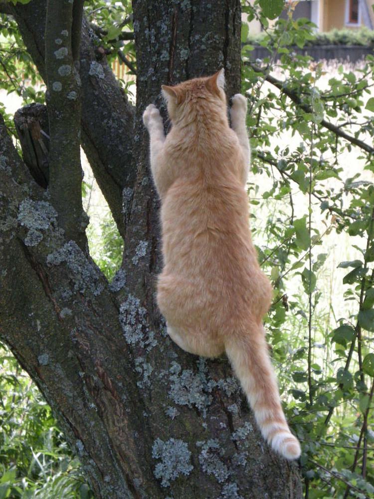 Ich glaub da sitzt ein Vogel am Baum