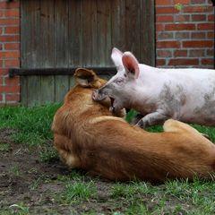 Ich glaub das Schwein beißt ;-P