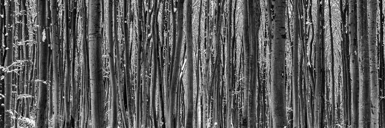 Ich glaub ich steh im Wald..