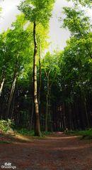 Ich glaub ich steh im Wald