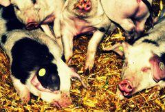 ...ich glaub',mein Schwein pfeift....