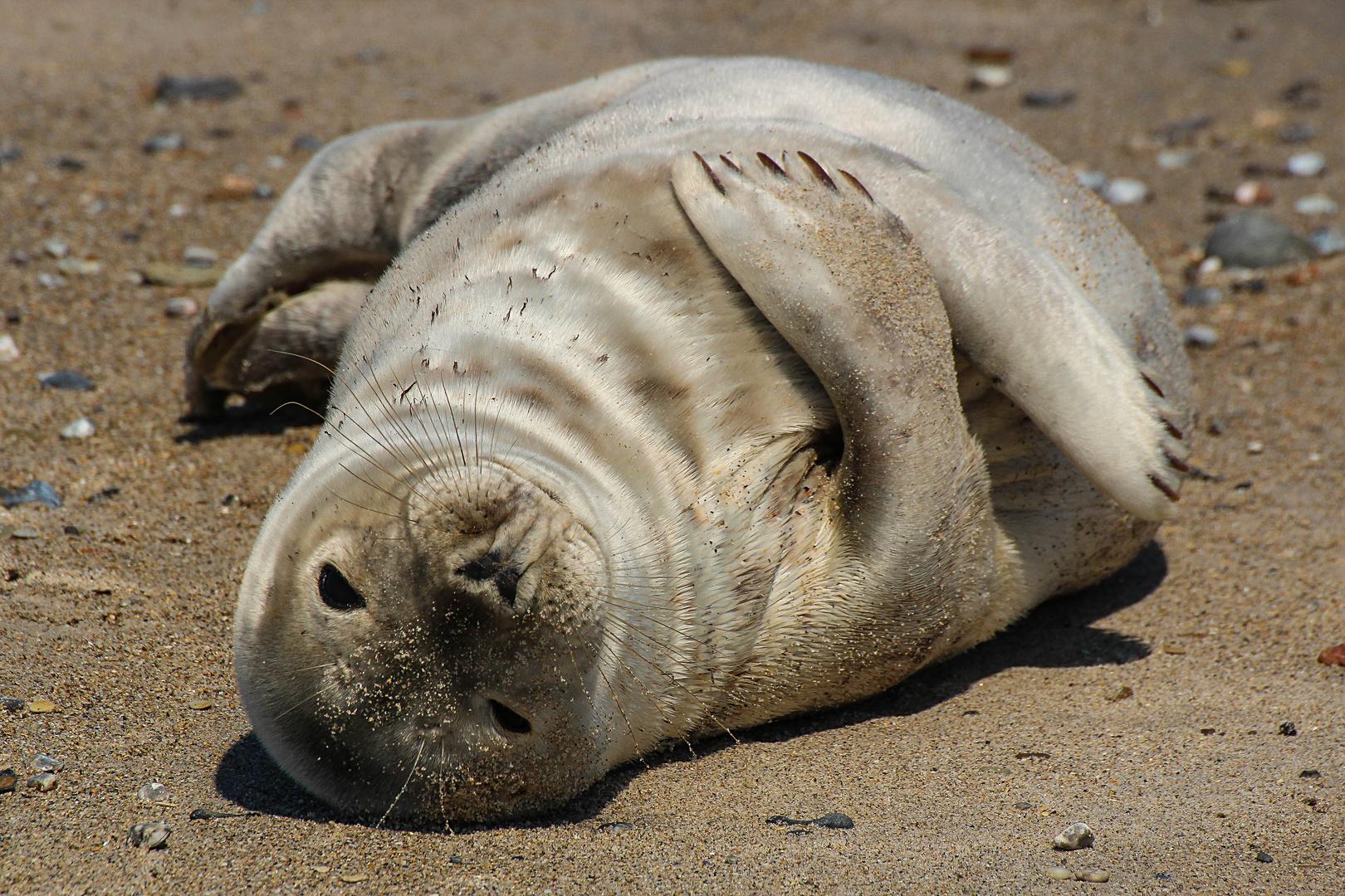 Ich Hab Keinen Bock Mehr Foto Bild Natur Nordsee Tiere Bilder