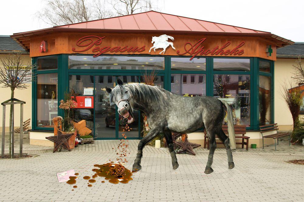 Pferde Kotzen Sehen