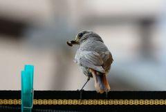 """""""Ich habe einen Vogel"""""""
