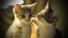 Ich hätte gerne 4 Pfund Katzen