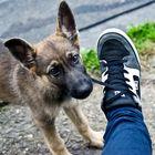 Ich helf dir beim Schuhe ausziehen :D