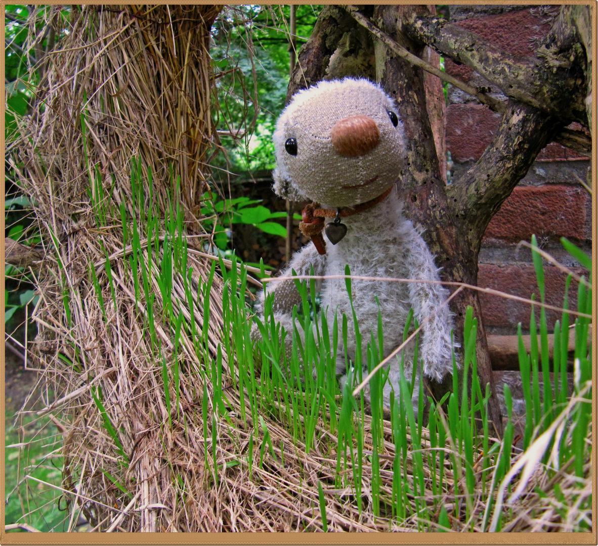 Ich hör das Gras wachsen!
