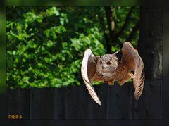 Ich kann meine Flügel...