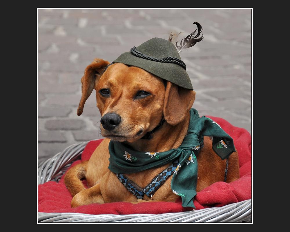 Ich kauf' mir lieber keinen Tirolerhund