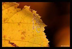 Ich krieg nicht genug.. vom goldenen Herbst.