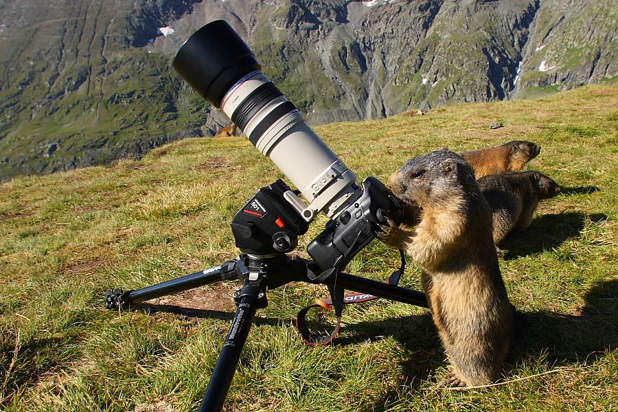 """Ich"""" lass"""" jetzt fotografieren."""