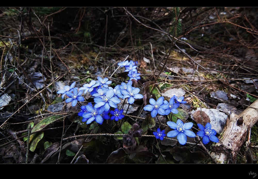 ~Ich LIEBE den Frühling~