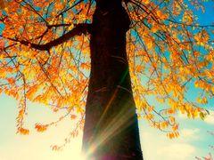 *** Ich liebe den Herbst ***