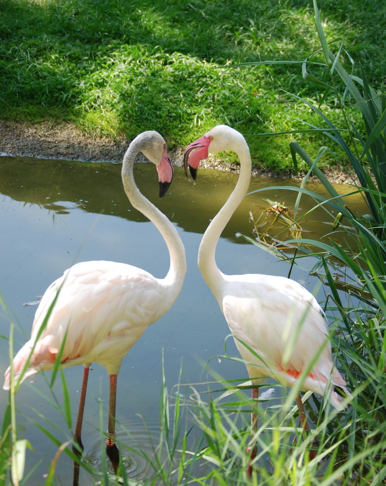 Tiere Liebe