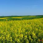 """Ich liebe, """"die gelben Teppiche"""", weil sie sehr fotogen sind......"""
