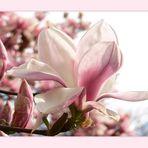 ich liebe diese Blüten