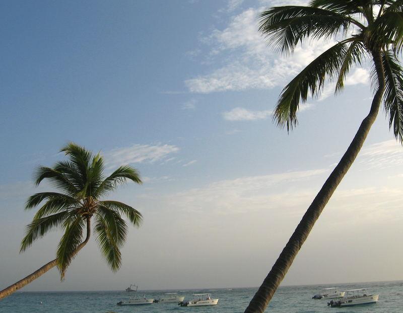 Ich liebe Palmen.... ;)