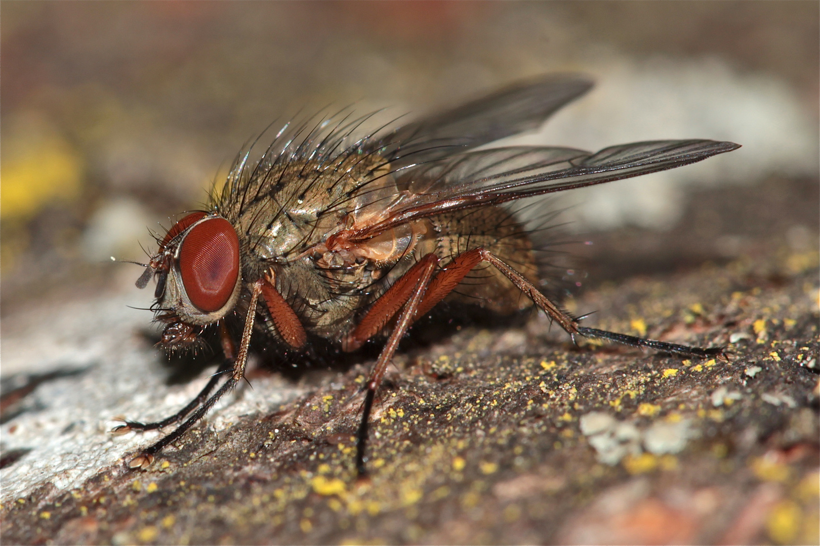Ich mach jetzt die Fliege - gute Nacht (-: !
