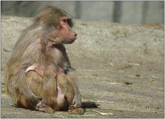 ... ich mach mich hier zum Affen ...