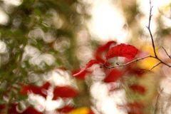 Ich mag den Herbst.....