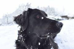 ich mag den schnee