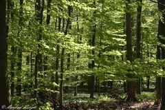 "Ich mag dieses ""Mai-Grün"" der Bäume :-)"