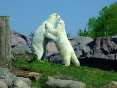 """"""" Ich möchte ein Eisbär sein....."""""""