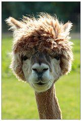 Ich muß mal zum Friseur...