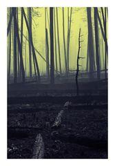 Ich, neulich im abgebrannten Wald