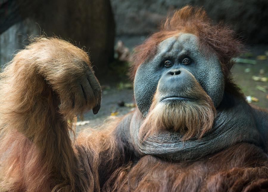 Ich Orang und Du?