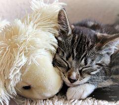 Ich schlafe nie allein!