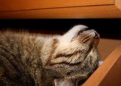 Ich schlafe wo ich will und wenns im Schubkasten ist.