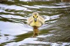 Ich schwimm euch einfach um !!!