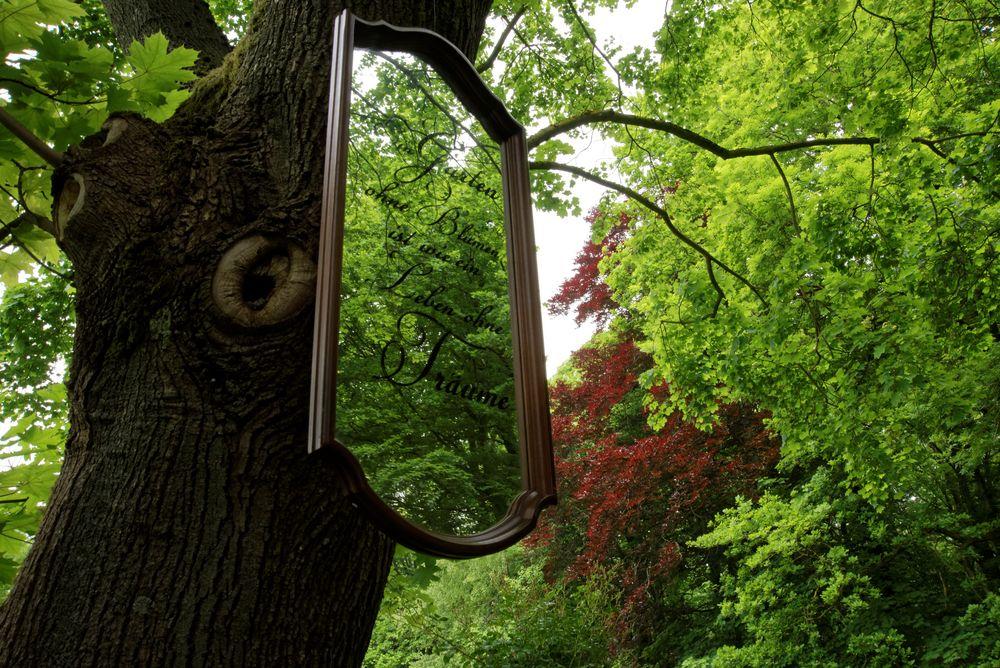 Ich seh' den Wald vor lauter Spiegel nicht
