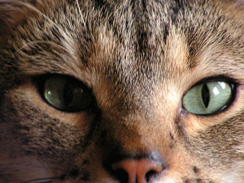 Ich seh Dich an