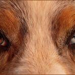 Ich seh Euch....