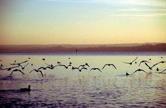 """""""Ich sehe das Bild rauschen und höre die Vögel kommen"""""""