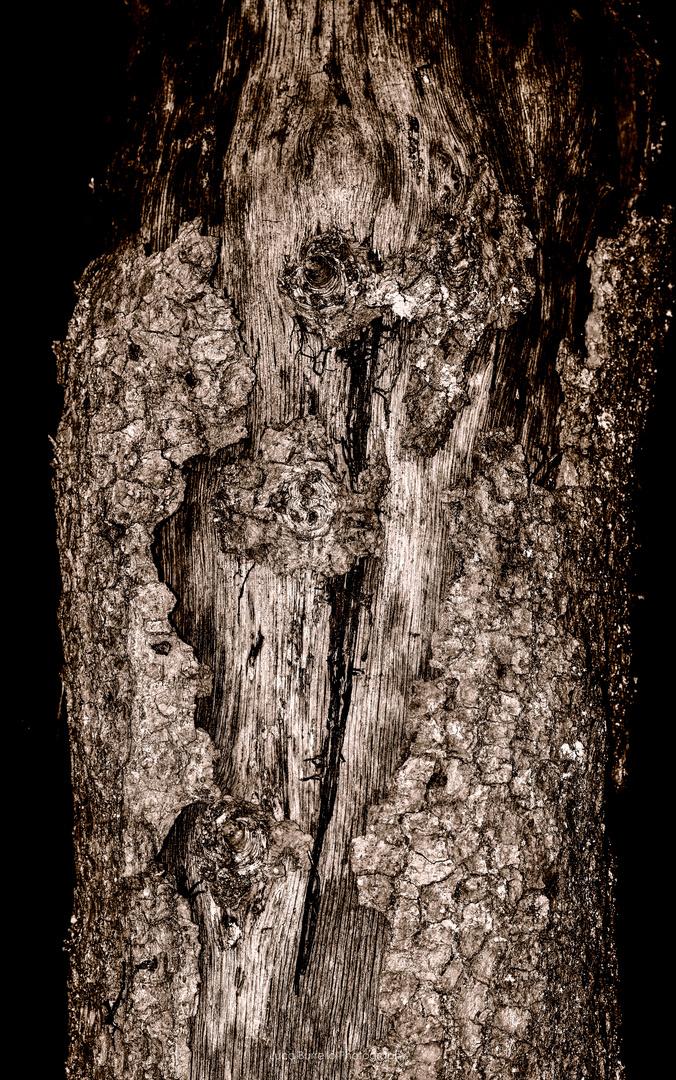 Ich sehe den Wald vor lauter Bäumen nicht