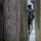 Ich sehe Dich!