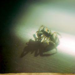 Ich Spinne.. .