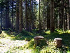 Ich stand im mitten im Wald - in Mittenwald