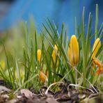 Ich such den Frühling überall...