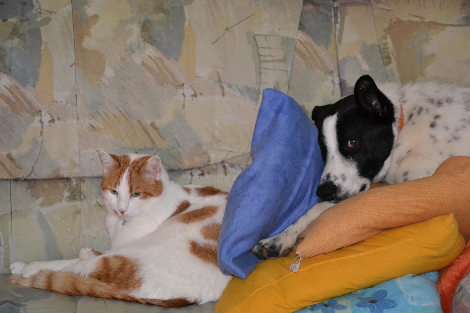 Ich verstecke mich lieber, sonst muss ich womöglich noch mit der Katze spielen.