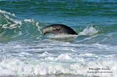Ich wär' lieber ein Delfin