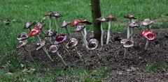 ich war Pilze sammeln ....